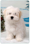 Coton du Tulear Cutting Board