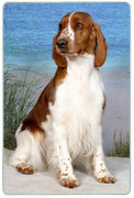 Welsh Springer Spaniel Cutting Board