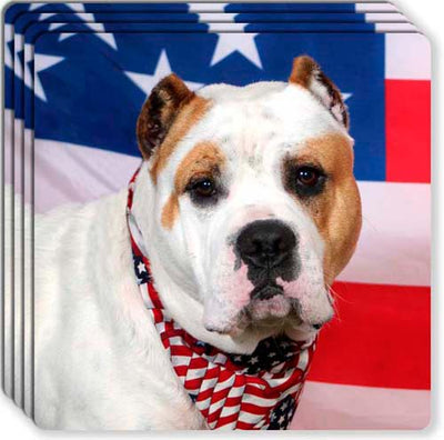 American Bulldog Rubber Coaster Set