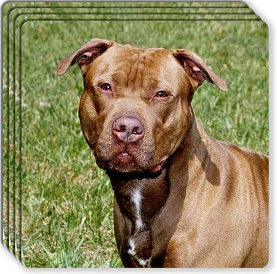American Pitbull Rubber Coaster Set