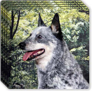 Australian Cattle Dog Rubber Coaster Set