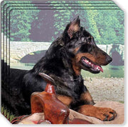 Beauceron Rubber Coaster Set