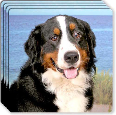 Bernese Mountain Dog Rubber Coaster Set