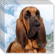 Bloodhound Rubber Coaster Set