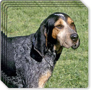 Blue Tick Coonhound Rubber Coaster Set