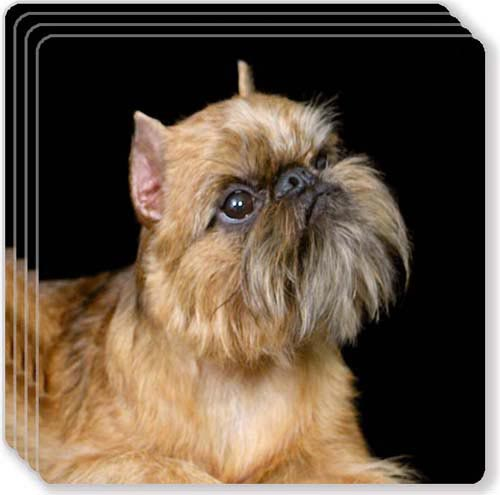 Brussels Griffon Rubber Coaster Set