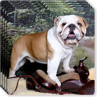 Bulldog Rubber Coaster Set