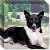 Canaan Dog Rubber Coaster Set