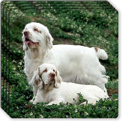Clumber Spaniel Rubber Coaster Set