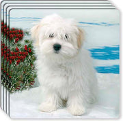 Coton du Tulear Rubber Coaster Set