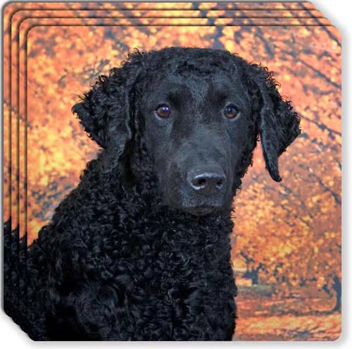 Curly Coated Retriever Rubber Coaster Set