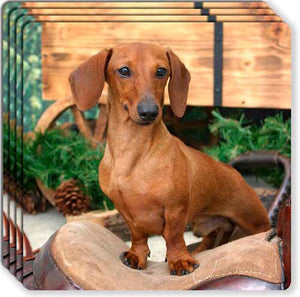 Dachshund Rubber Coaster Set