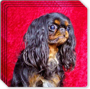 English Toy Spaniel Rubber Coaster Set