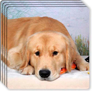Golden Retriever Rubber Coaster Set