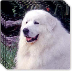 Great Pyrenees Rubber Coaster Set