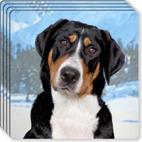 Greater Swiss Mountain Dog Rubber Coaster Set