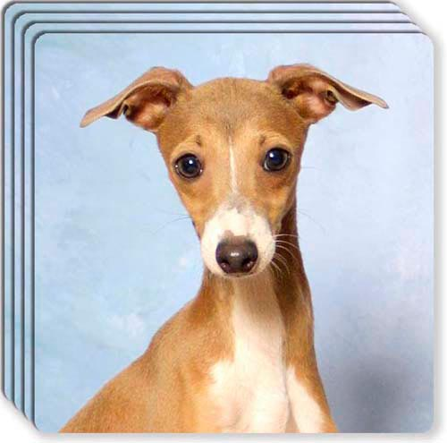 Italian Greyhound Rubber Coaster Set