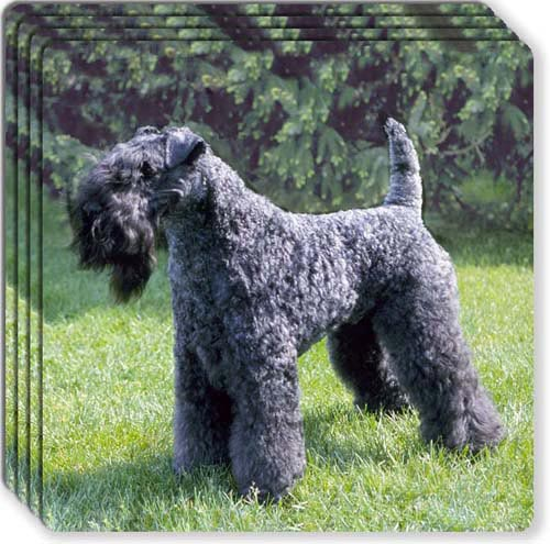 Kerry Blue Terrier Rubber Coaster Set