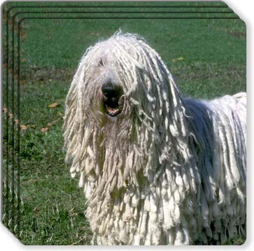 Komondor Rubber Coaster Set