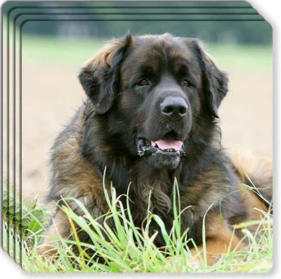 Leonberger Rubber Coaster Set