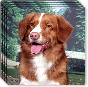 Nova Scotia Duck Toller Rubber Coaster Set