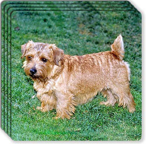 Norfolk Terrier Rubber Coaster Set