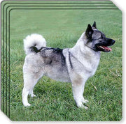 Norwegian Elkhound Rubber Coaster Set