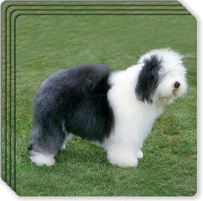 Old English Sheepdog Rubber Coaster Set