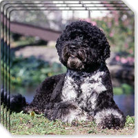Portuguese Water Dog Rubber Coaster Set