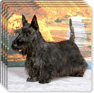 Scottish Terrier Rubber Coaster Set