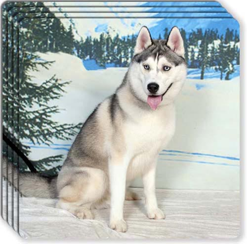 Siberian Husky Rubber Coaster Set