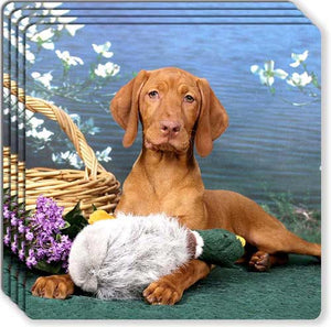 Vizsla Rubber Coaster Set