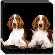 Welsh Springer Spaniel Rubber Coaster Set