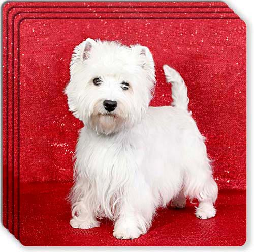 West Highland White Terrier Rubber Coaster Set