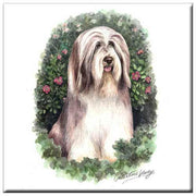 Bearded Collie  Tile