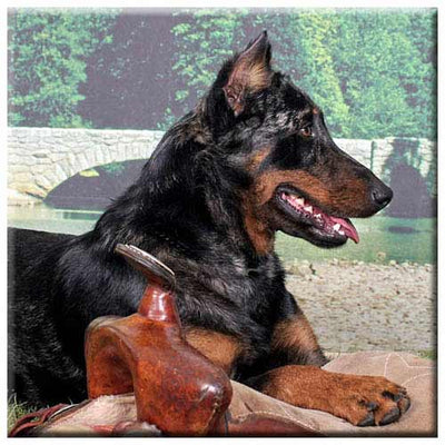 Beauceron  Tile