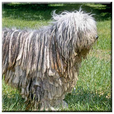 Bergamasco  Tile