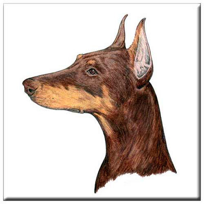 Doberman Pinscher  Tile