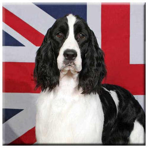 English Springer Spaniel  Tile