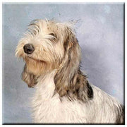 Grand Basset Griffon Vendeen  Tile