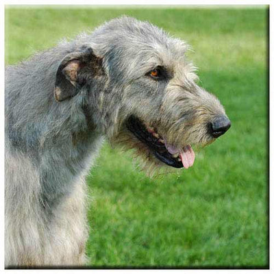 Irish Wolfhound  Tile