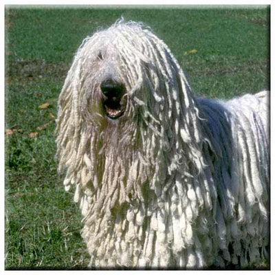 Komondor  Tile