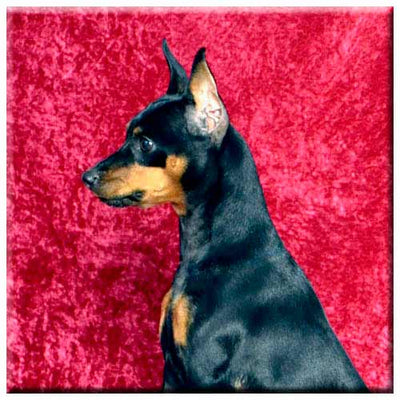 Miniature Pinscher  Tile