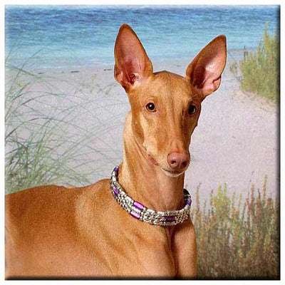 Pharaoh Hound  Tile