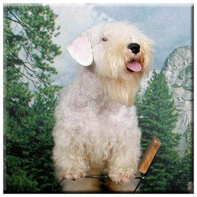 Sealyham Terrier  Tile