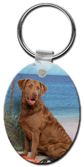 Chesapeake Bay Retriever  Key Chain