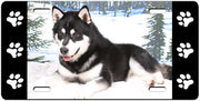 Alaskan Malamute License Plate
