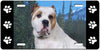 American Bulldog License Plate