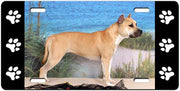 American Staffordshire Terrier License Plate