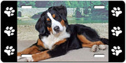 Bernese Mountain Dog License Plate